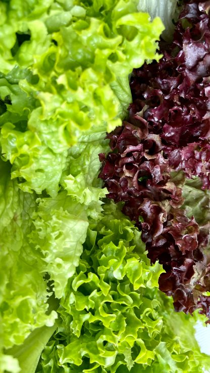 purple and green vegetable plant